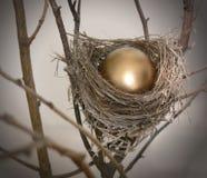 Ei 2 van het nest Royalty-vrije Stock Foto