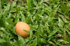 Ei auf dem grünen Gras Lizenzfreies Stockfoto