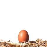 Ei auf einem Strohnest Stockfoto