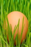 Ei auf Gras Stockbild