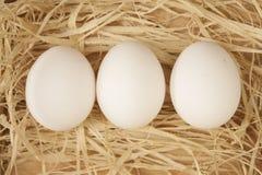Ei auf Heu Stockfotografie