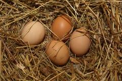 Ei, das in einem Nest liegt Stockbild