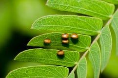 Ei der Basisrecheneinheit auf grünem Blatt Stockfotos