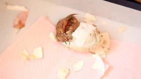 Ei des neugeborenen Kükens Reißverschluss zumachen, das getragen wird stock footage