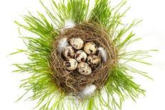 Ei in echt nest Stock Fotografie