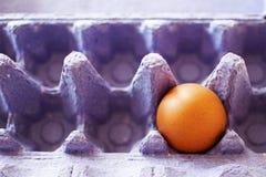 Ei in een karton Stock Foto's