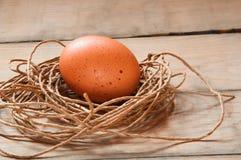 Ei in een nest Stock Foto's