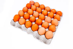 Ei in einem Karton Stockbild