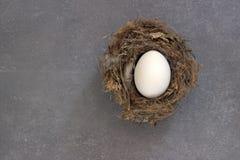 Ei in einem Nest Stockfoto