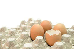 Ei en shell Royalty-vrije Stock Afbeeldingen
