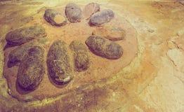 ei fossiele dinosaurus op rotsachtergrond Royalty-vrije Stock Fotografie