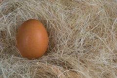 Ei in het gras Royalty-vrije Stock Afbeelding