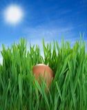 Ei in het gras Royalty-vrije Stock Afbeeldingen