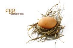 Ei in het nest stock foto