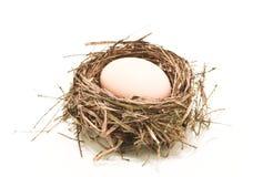 Ei in het nest Stock Fotografie
