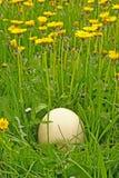 Ei im Gras Lizenzfreies Stockbild