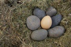 Ei op de zwarte steen Stock Foto's