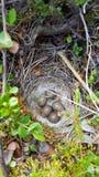Ei weg von lillte Vogel lizenzfreie stockfotografie