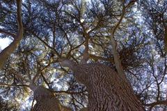 Eibe-Baum-Kabinendach Stockfotografie