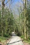 Eibe-Baumwaldung Stockbild