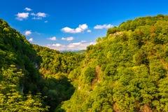 Eibe und Buchsbaum Grove, Adler, Sochi, Russland Lizenzfreies Stockfoto