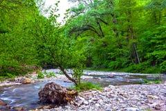 Eibe und Buchsbaum Grove, Adler, Sochi, Russland Stockfotografie