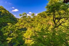 Eibe und Buchsbaum Grove, Adler, Sochi, Russland Stockbild