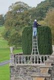 Eibenbaum, der als Garten décor Großbritannien getrimmt wird Stockfotografie