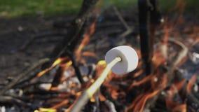 Eibisch auf einem Stock geht gebraten in einem Feuer Kamera folgen Stock stock video footage
