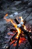 Eibischbraten auf Feuer am Abend stockbild