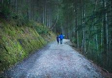 Eibsee湖,加米施・帕藤吉兴,巴法力亚阿尔卑斯,德国, 10 库存照片