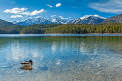 Eibsee lake, Germany Royalty Free Stock Images
