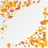 Eiche, Ahorn, wilde Ascheberesche verlässt Vektor, Herbstlaub auf transparentem Hintergrund lizenzfreie stockfotos