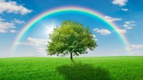 Eiche auf einer grünen Wiese bedeckt durch einen Regenbogen Lizenzfreies Stockbild