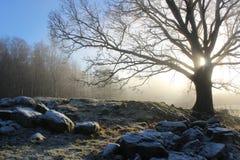 Eiche in der Landschaft im Winter Lizenzfreie Stockbilder