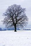 Eiche im Winter Lizenzfreie Stockbilder