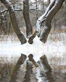 Eiche im Winterwald Lizenzfreies Stockfoto