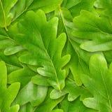 Eiche treibt nahtloser Hintergrund Blätter. Stockfotos