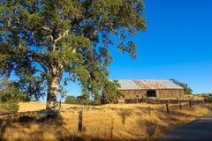 Eiche u. Scheune in California& x27; s-Goldland stockbild