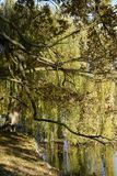 Eiche und Willow Tree auf einem See-Ufer, Tschechische Republik, Europa Lizenzfreie Stockfotos