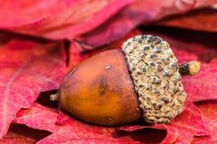 Eichel auf Fall-Blättern Stockbild