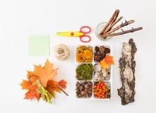 Eicheln, Kiefernkegel, Moos, Beeren der Eberesche, Steine für die Verzierung Lizenzfreie Stockbilder