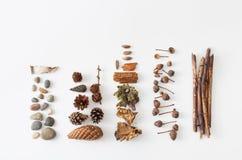Eicheln, Kiefernkegel, Moos, Beeren der Eberesche, Steine für die Verzierung Stockbild