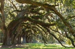 Eichen-Alleen-Charleston Sc Stockfotos