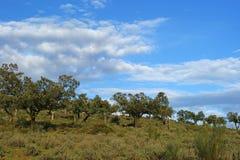 Eichen auf Berg und bewölktem Hintergrund des blauen Himmels Stockfotografie