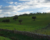 Eichen auf grüner Wiese mit Steinzäunen und bewölktem Hintergrund des blauen Himmels Lizenzfreie Stockbilder