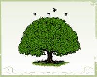 Eichen-Baum Lizenzfreie Stockfotos