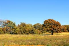 Eichen-Baum Stockfotografie
