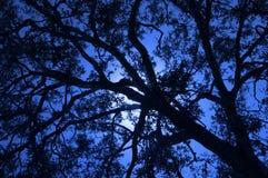 Eichen-Baum Lizenzfreies Stockbild