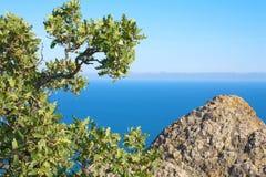 Eichen-Baum und Felsen Karadag Berg, Nationalpark Stockfoto